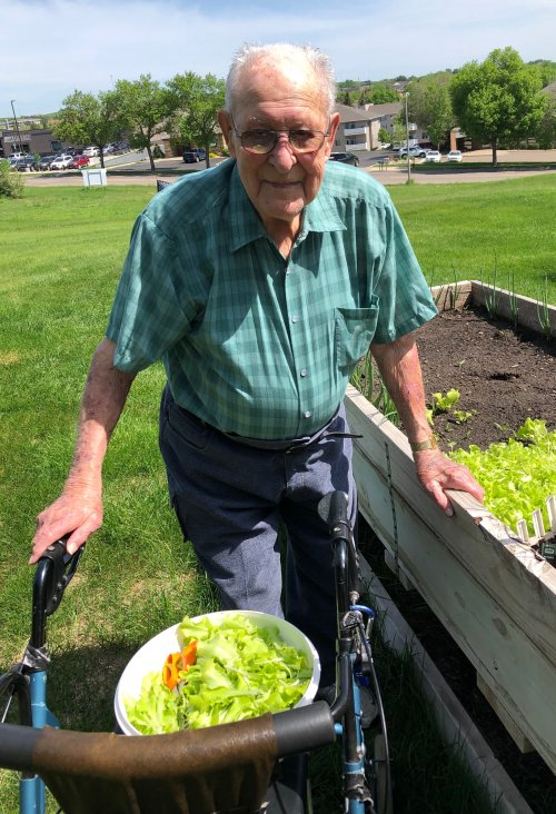 Roy is already harvesting some lettuce from his garden! His gardens always produces wonderfully!