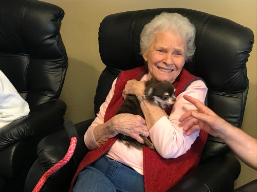 Judy getting cuddles from a Chihuahua!