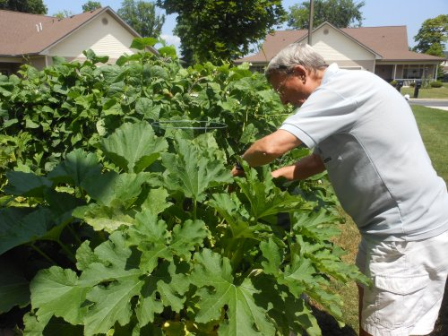 Mike checking for possible pests.  His plants seem to always be insect free.