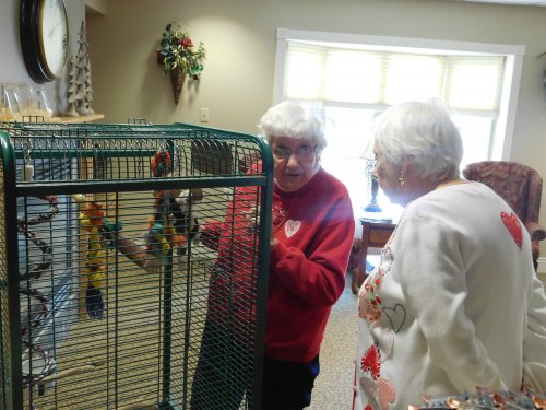Residents, Betty and Gloria, take time to chat with 'Doc', our facility bird.
