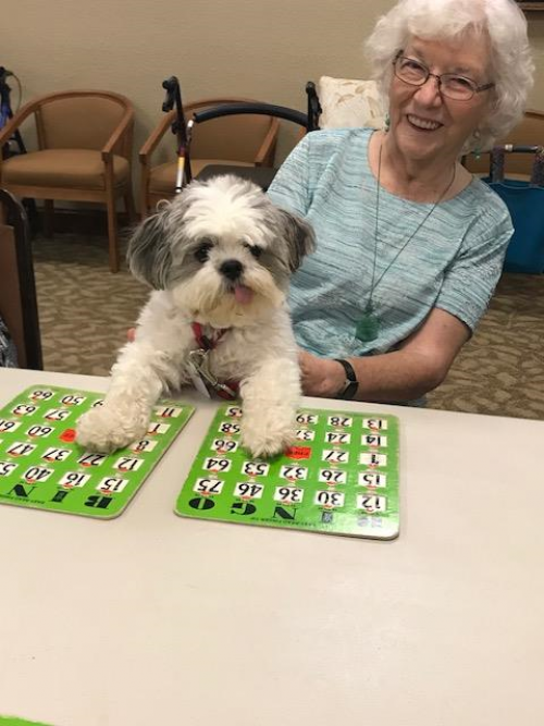 Bingo has gone to the dogs?....Bandit won 3 times today!