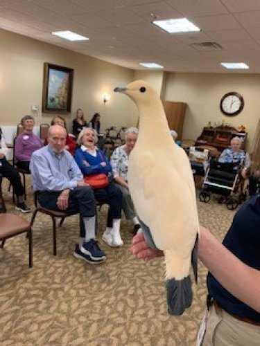 We loved the Pied Imperial Pigeon from the KC Zoo.