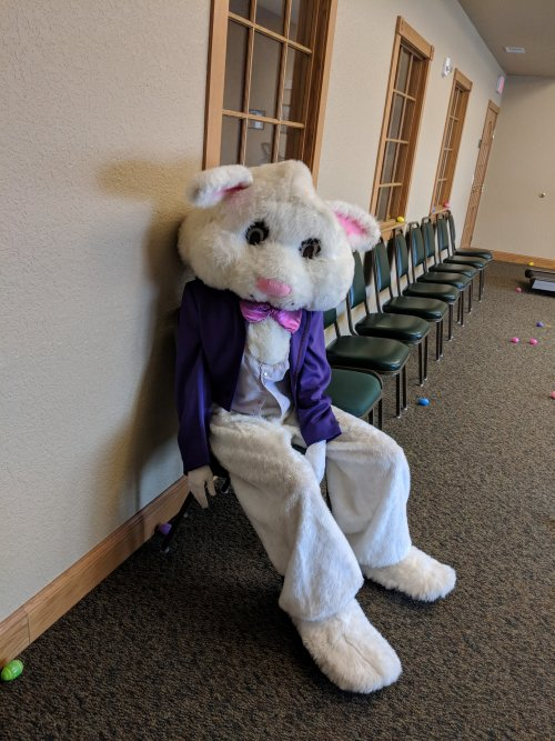 Primrose Lima's Bunny was resting before the kids came looking for the eggs.