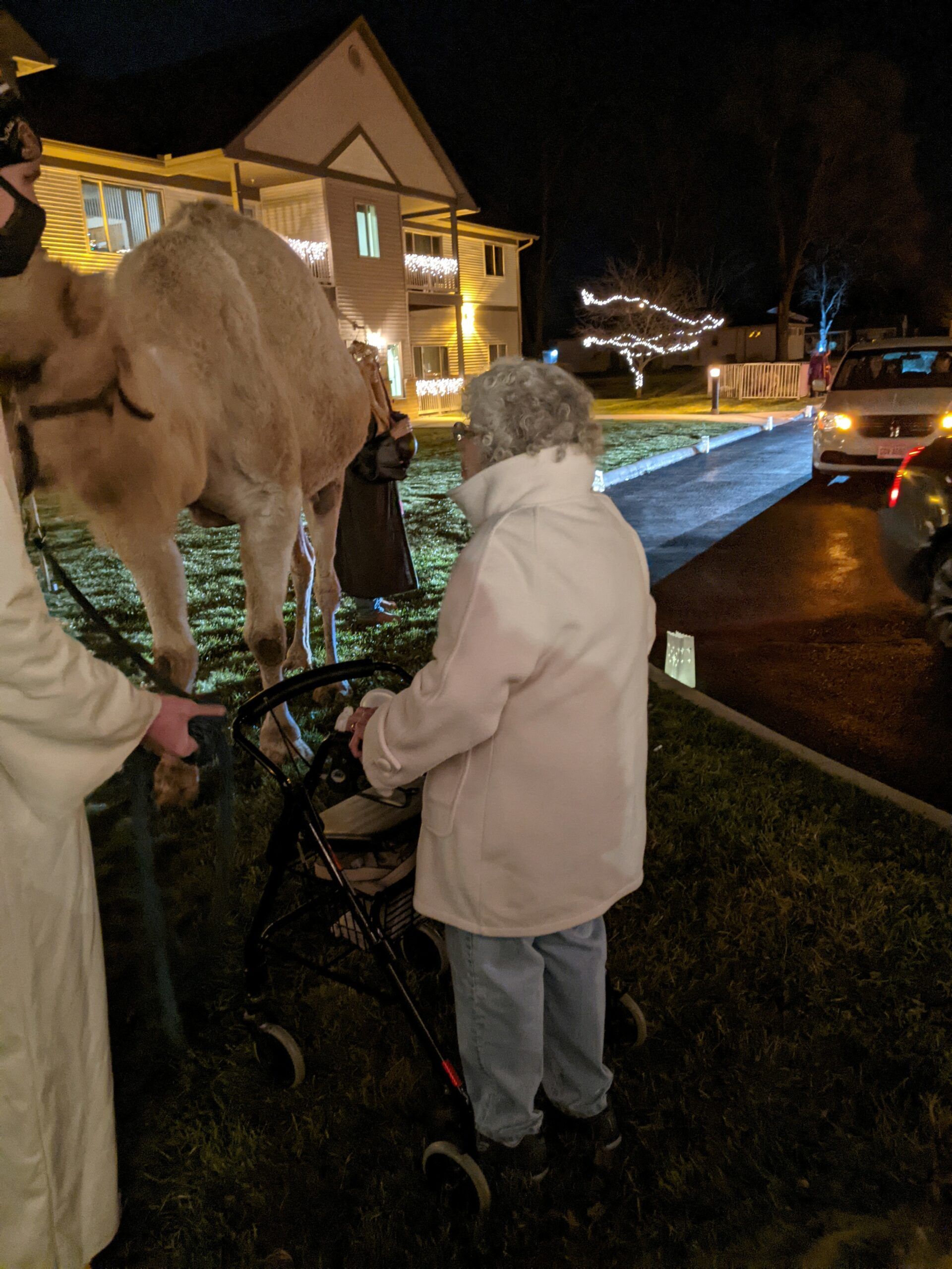 Carol was wanting to pet the Camel at the Live Nativity that Primrose of Lima had.