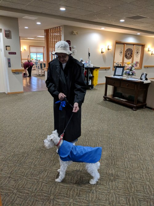 When it rains, it pours! But that does not stop our Primrose pups from getting outside! Look at how adorable Max is in his cute raincoat!