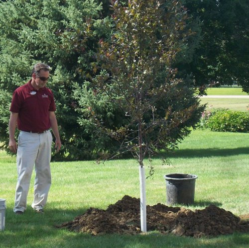 Our Bus Driver, Steve taking a moment of silence to remember one of our residents, Gordon. This tree was planted in his memoriam. He loved the outdoors and really wanted to watch the tree removal that we were having on the property. Unfortunately, he was unable to see the tree removal. The management team thought the best way to honor him would be to plant a colorful tree for his colorful personality.