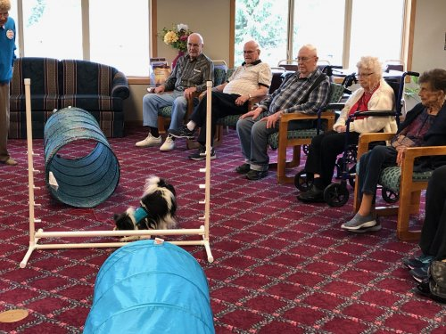 Residents enjoy watching the therapy dogs show off some tricks!