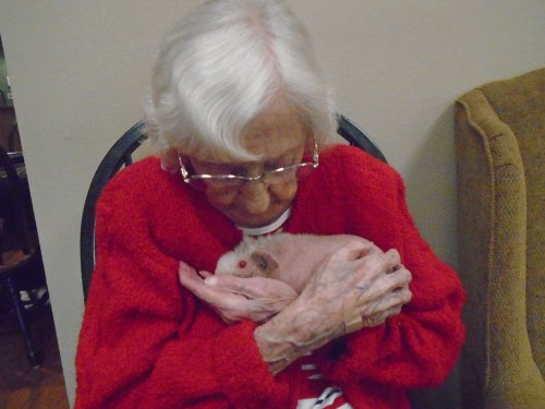 4-H Pet pals with therapy animals.  A little snuggling with a skinny pig.