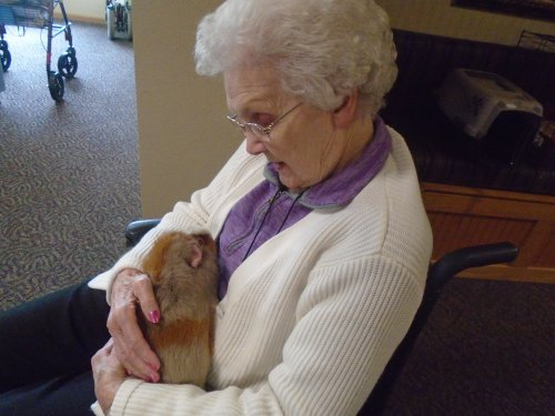 4-H Pet pals with therapy animals.  A little snuggling with a Ginny pig.