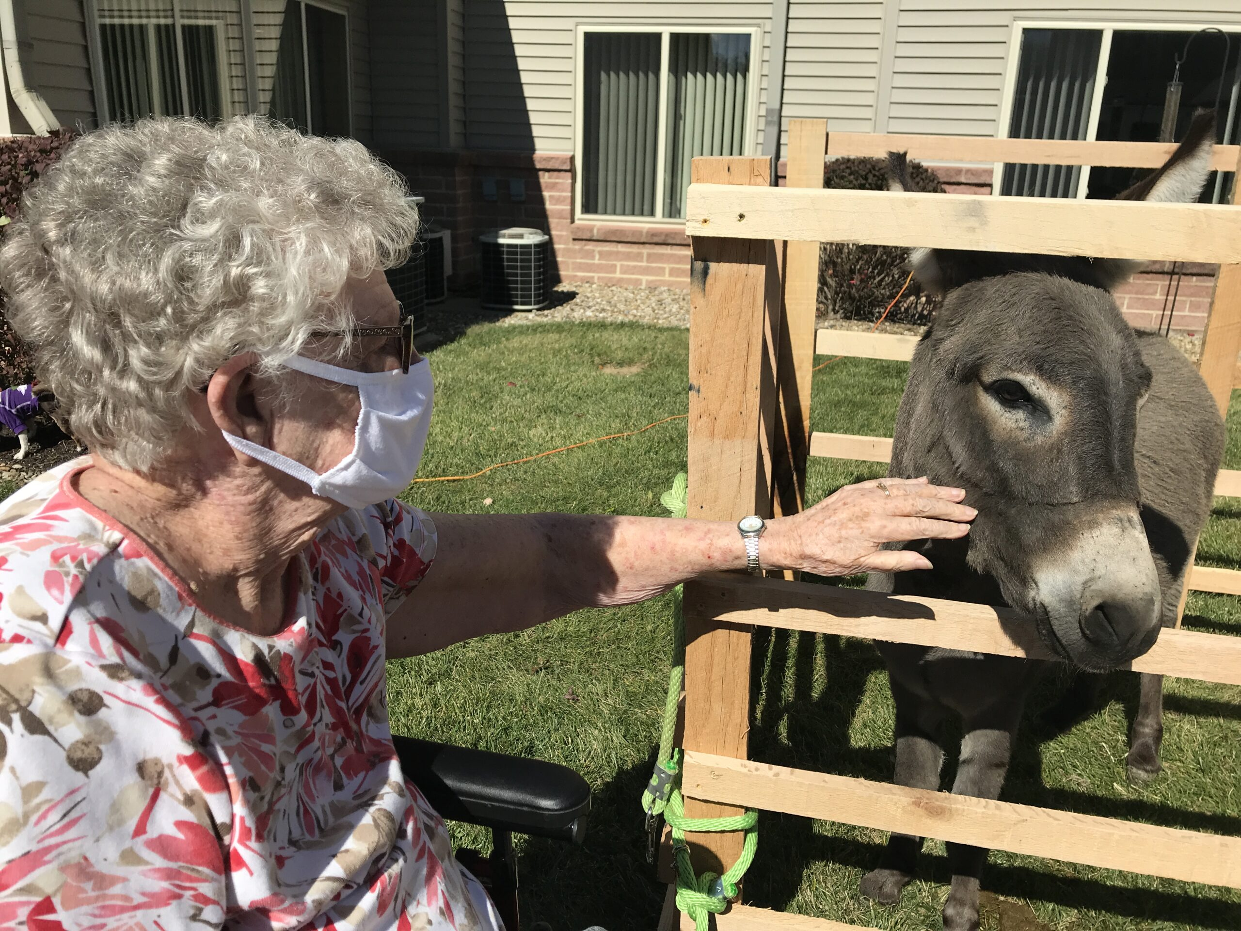 MANSFIELD OHIO Neva petting a donkey for the first time