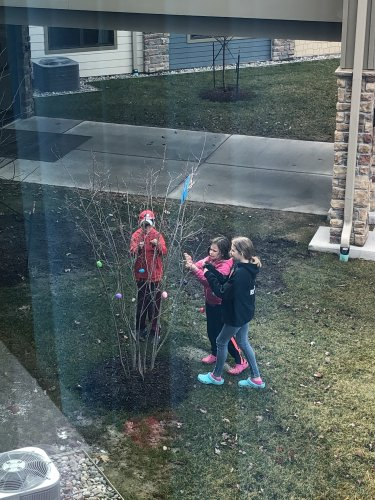 kids decorateing the trees outside  with Easter eggs