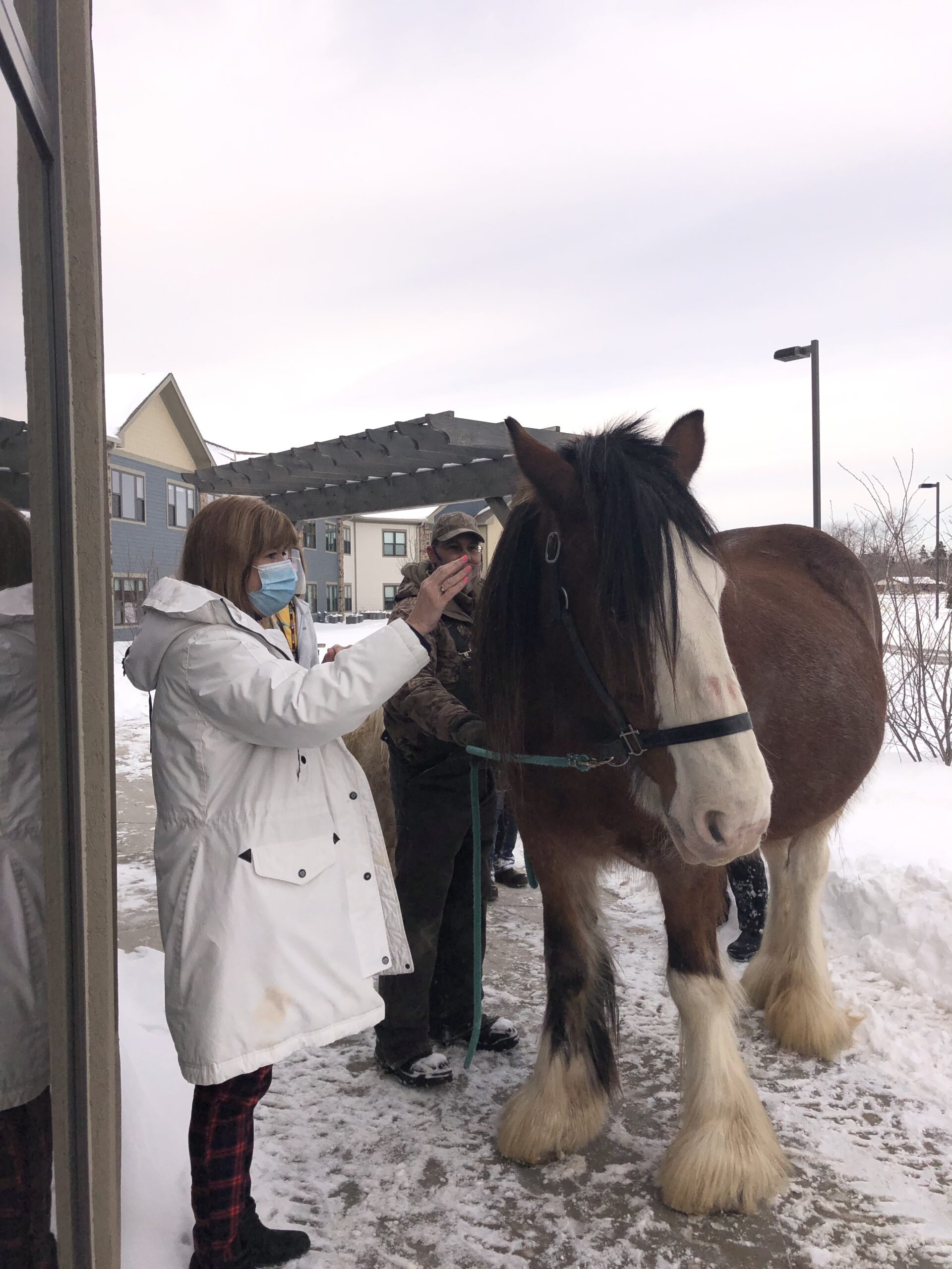 Jane loves the Clydesdale