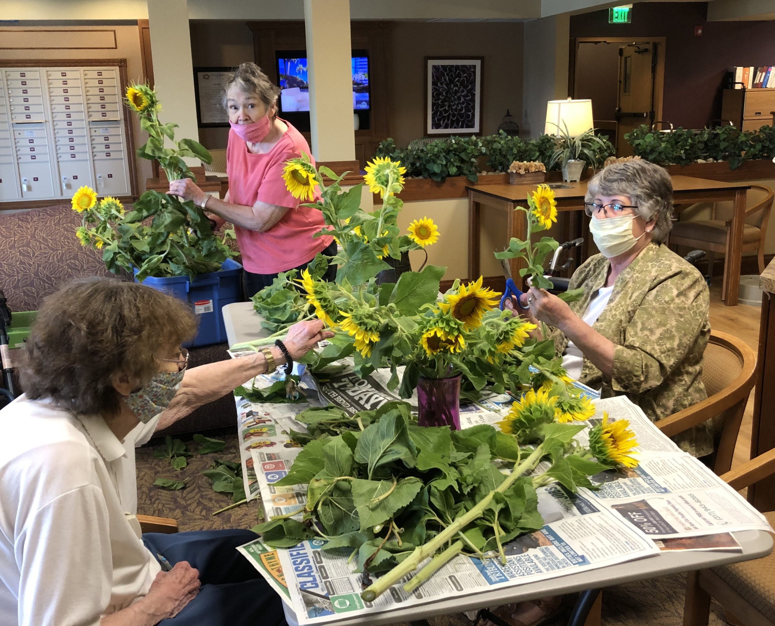 Getting sunflowers donated by Thistleberry Farm ready for vases.