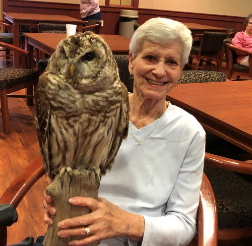 Look at this owl!