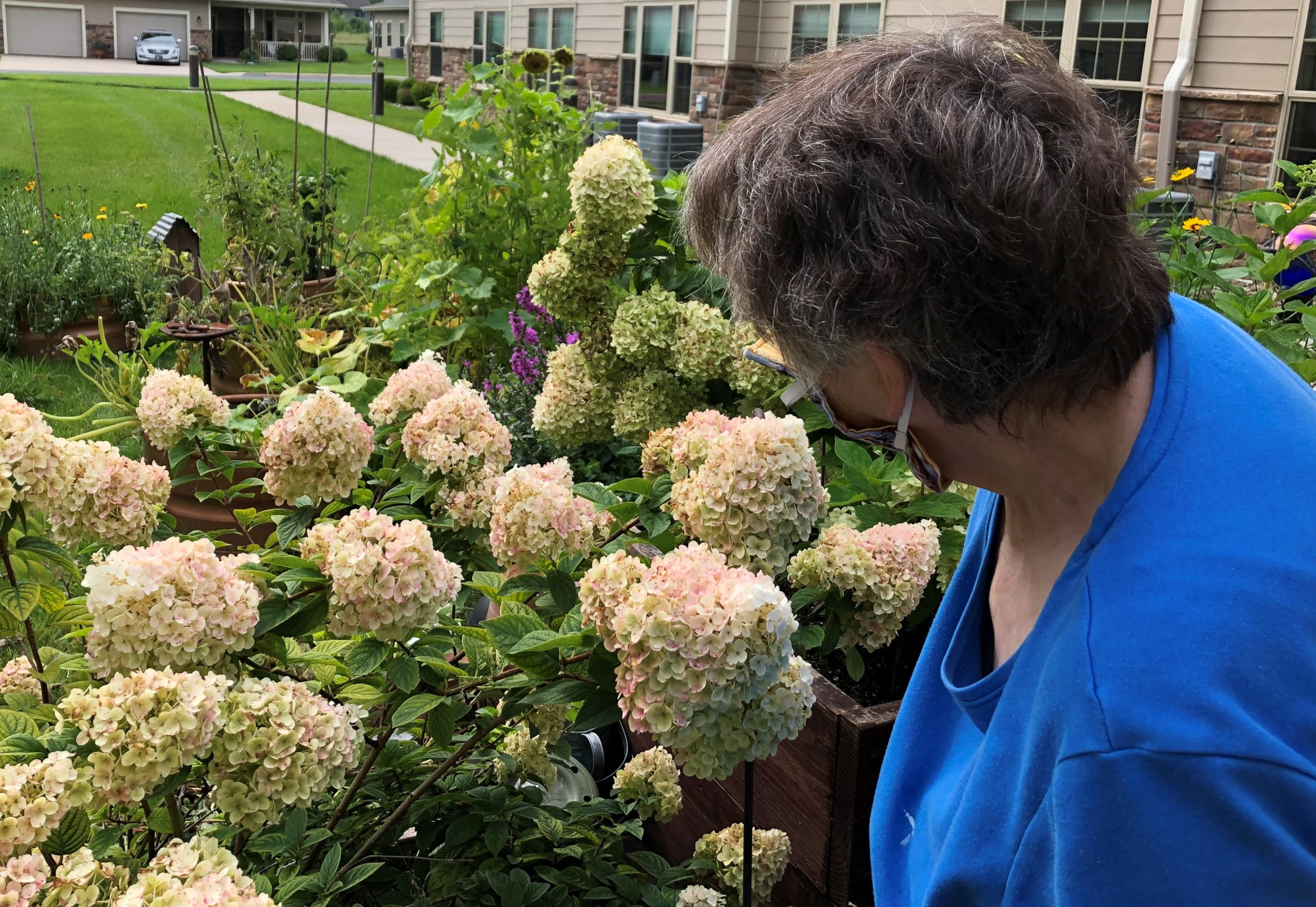 Thank you Sandy for making our Primrose garden beautiful.