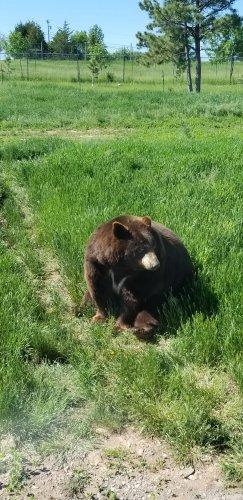 Bears all around!