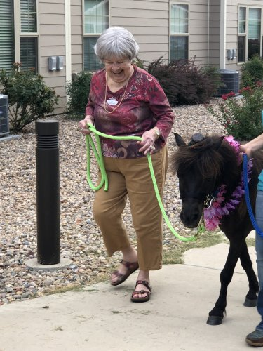 Baxter the mini horse visited us. Here is Miss Jo walking him around the gazebo.