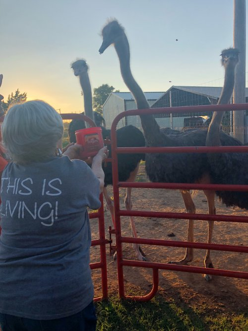 Miss Jo feeding an ostrich! This is Living!