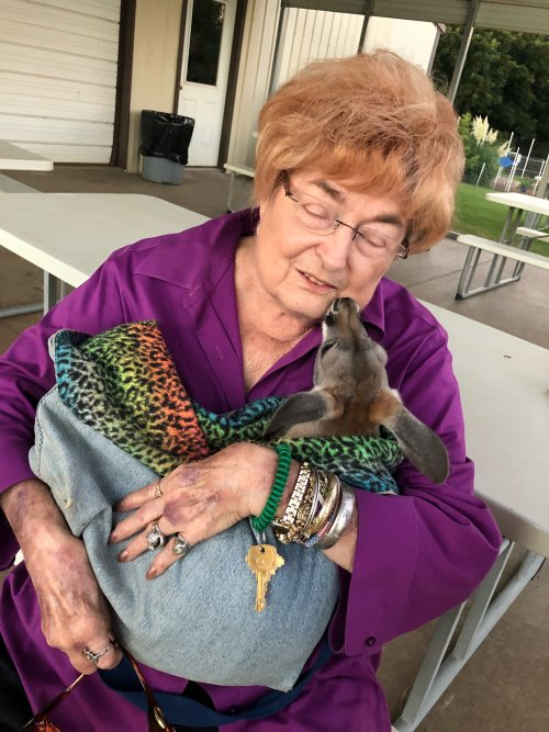 Miss Pat getting baby kangaroo kisses.