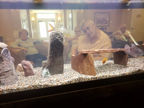 Residents are viewing the new fish that was added to our new 125 gallon fish tank.