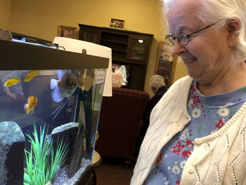 Dorothy looks at the 125 gallon fish tank and smiles as the fish entertain her.