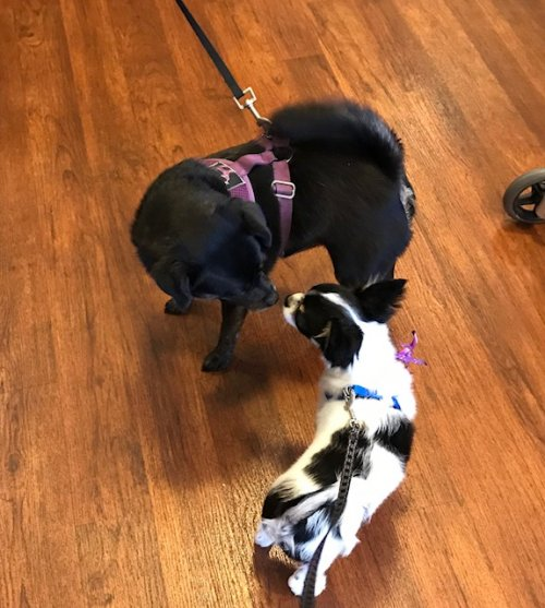 Even the staff and residents brought in their dogs in to celebrate the day.