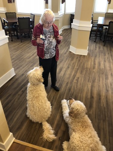 Marley and Hunter both stare at Dorothy while she enjoys some homemade cookies. Sorry dogs, you already got some homemade dog treats earlier that the residents made.